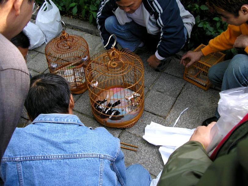 0064-HKKowloonMongKokYuenPoStreetBirdGarden
