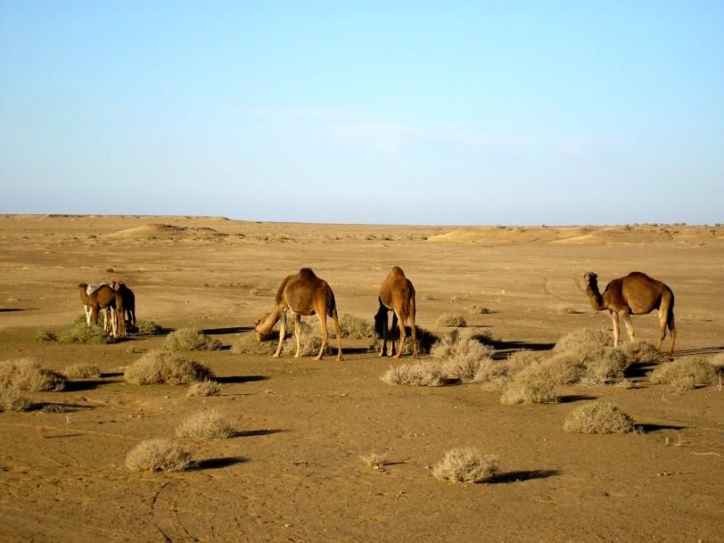 042-Nefta-Deserto
